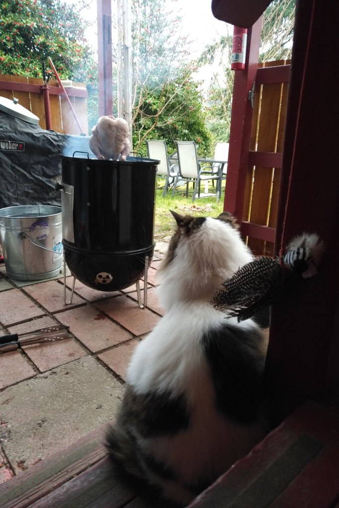Cat watching chicken on grill.